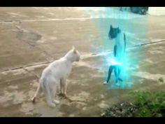 """O Gato Sayajin do Goku - The Cat's Sayajin Goku - http://positivelifemagazine.com/o-gato-sayajin-do-goku-the-cats-sayajin-goku/ http://img.youtube.com/vi/ESPbcITKze8/0.jpg   Luta de gato bem interessante.. vejam também este vídeo: Homem veste roupa de mulher, tem relação sexual com homem ,mas fala que não é gay, veja o …    source Please follow and like us:  var addthis_config =   url: """""""",  title: """""""""""