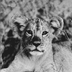 Young Lions Italy 2013 by LUMEN BIGOTT, via Behance