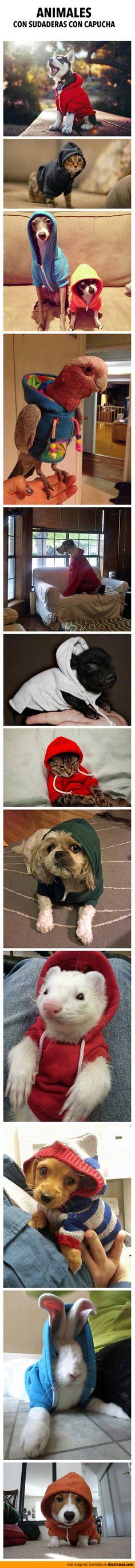 Animales con sudaderas con capucha.