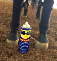 Top Ten Easy and Simple Horse Show Life Hacks - lots of great ideas!