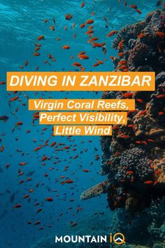 Although the #Zanzibar Archipelago is known for its spices and pristine #beaches, some of its most epic #adventures take place #underwater. From exploring forgotten #shipwrecks to #swimming with #manatees, rays, #whalesharks, #turtles and friendly #dolphins, #diving in Zanzibar is an experience of a lifetime. Beautiful Places In The World, Amazing Places, Swimming With Manatees, Nature Photography, Travel Photography, Travel Planner, Africa Travel, Travel Advise, Travel Tips