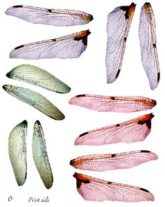 Create gorgeous wings for OOAK Fairy sculptures or any art project where wings are needed. Insect Wings, Dragonfly Wings, Butterfly Wings, Fairy Wings, Angel Wings, Bee Wings, Elves And Fairies, Butterfly Jewelry, Doll Repaint