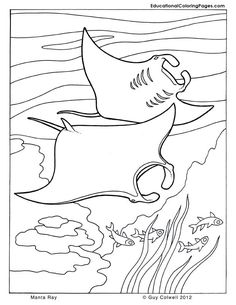Manta Ray Coloring Pages. Moving like a graceful bird in the sea, manta rays are one of the diver's idols fish. This animal full of charisma turns out to have uniqueness and su. Dolphin Coloring Pages, Fish Coloring Page, Colouring Pics, Animal Coloring Pages, Coloring Pages To Print, Coloring Pages For Kids, Coloring Sheets, Coloring Book Pages, Printable Coloring Pages