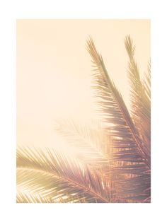 Golden Palm Tree Wall Art Prints by Wilder California | Minted Tropical decor #tropicaldecor