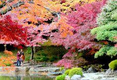 Colors of Autumn, Tokyo Japan / Koishikawa Korakuen Gardens, Tokyo, Japan. takau99
