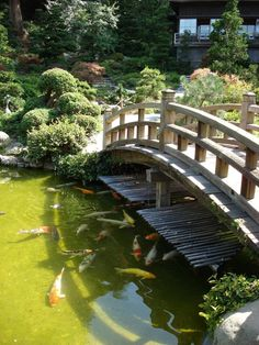 Gardening : Large Koi Pond With Bridge In Japanese Garden ~ Glubdub
