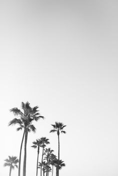Black and White California Palms Art Print by Jessica Hickerson