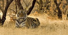 India Photo Tour | Photo Expeditions | Natural Habitat Adventureswww.nathab.com