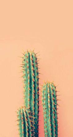 Cactus Thorns spines and prickles Vegetation Acanthocereus tetragonus Terrestrial plant Plant Wallpaper, Iphone Background Wallpaper, Aesthetic Iphone Wallpaper, Aesthetic Wallpapers, Acrylic Landscape, Cactus Art, Cactus Plants, Tropical Plants, Potted Plants