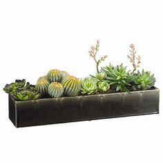 Features:  -Ceramic container included.  -Color: Green.  -Rectangular base included.  Product Type: -Plant.  Plant Type: -Succulent.  Orientation: -Floor.  Plant Material: -Plastic.  Base Included: -Y
