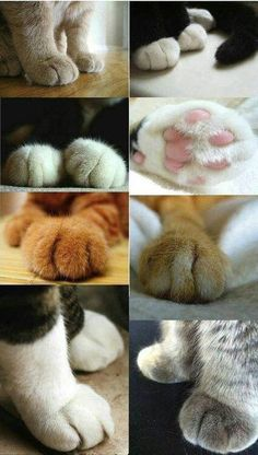 I have an unhealthy obsession with -- paws