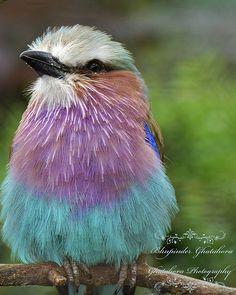 Bird | Photograph taken at Birdworld Holt Pound, Farnham, Su… | Flickr