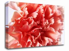 Peach Carnation Ruffles floral canvas from only £19.99 at Infusion Art http://www.infusionart.co.uk/products/Peach-Carnation-Ruffles-251329.aspx
