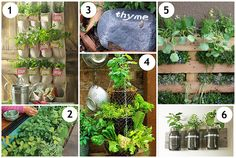 pictures of small farms | DIY Herb Garden Ideas | Mrs. Fields Secrets