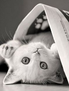 Kitten playing with the newspaper