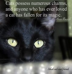 """Cats possess numerous charms, and anyone who has ever loved a cat has fallen for its magic."" --Susan Easterly"