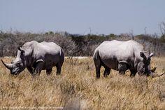 Etosha Park Namibia Africa, Park, Animals, Adventure Trips, Travel, Animales, Animaux, Parks, Animal