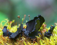 hongos y setas increibles 34