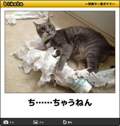 ち……ちゃうねん Animals And Pets, Funny Animals, Cute Animals, Cute Cats Photos, Funny Pictures, Cat Entertainment, Cat Info, I Love Cats, Funny Cute