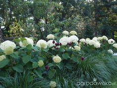 """Moja """"przyziemna"""" :) pasja - strona 1041 - Forum ogrodnicze - Ogrodowisko"""