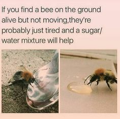 Save the bees please share and you can also offer them honey mixed with a bit of water #seedles