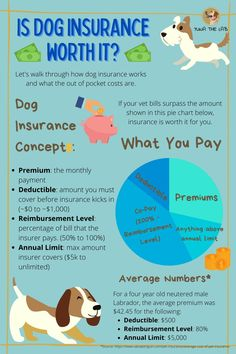 Is dog insurance worth it? Let's start with the basic concepts of dog insurance, and the average cost of a policy. If your vet bills run higher than this on the regular, dog insurance could be for you. #yunathelab #doginsurance #dogtips #dogcare #doghealth #dogfacts