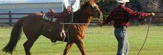 Tips for Starting a Horse Under Saddle ‹ JediHorsemanship