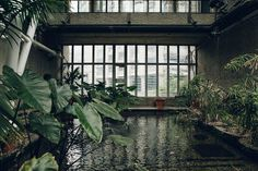 Haarkon Barbican Conservatory Greenhouse Glasshouse jungle plants green london travel concrete architecture water pond carp #greenhouseideas #conservatorygreenhouse