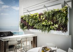 http://www.aqua-terra.ws/hps-green-wall-vitri