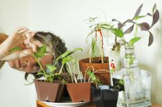How to Prevent Spider Mites on Houseplants -- via wikiHow.com