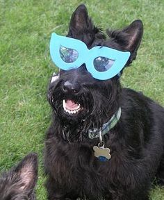 Like my glasses?