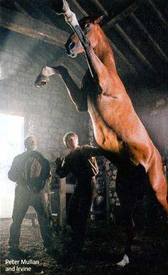 war-horse-movie-image-jeremy-irvine-peter-mullan-01.jpg (816×1341)