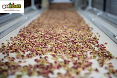 GELFRUIT ITALIA - FRUTTA SECCA E SEMILAVORATI : Gelfruit Italia, accurata selezione delle materie ...