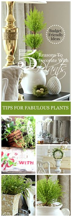 5 REASONS TO DECORATE WITH PLANTS  Budget friendly decor ideas-lots of inspiration