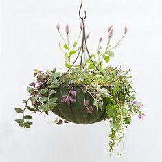 Chandelier Hanging Basket @terrain.com