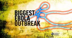 ebola update - Google Search
