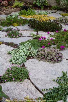 99 Creative Rock Garden Ideas For Your Backyard Landscape Design, Garden Design, Landscape Rocks, Ground Cover Plants, Mediterranean Garden, Garden Cottage, Shade Garden, Garden Paths, Garden Steps