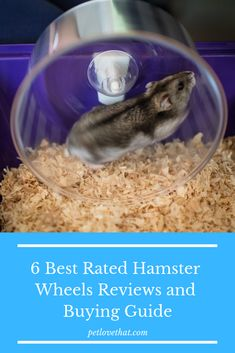 Hamster owners should have a medium of exercising for their pet. The most popular and effective media of exercising your hamster is a wheel. Hamster Toys, Hamsters, Hamster Accessories, Hamster Wheel, Syrian Hamster, Perfect Beard, Beer Opener, Gerbil, Best Rated