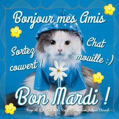 Bonjour mes amis. Sortez couvert! Chat mouillé :) Bon Mardi !