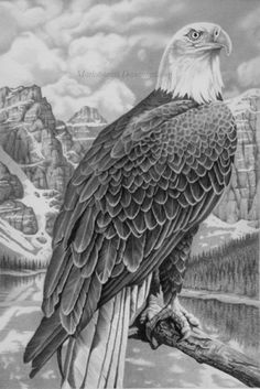 Talons and legs look a little lame but it& all practice Pencil on smooth Bristol The eagle was referenced from an old book i have. The background was insp. Wood Burning Patterns, Wood Burning Art, Bird Drawings, Animal Drawings, Aigle Animal, Eagle Drawing, Eagle Pictures, Eagle Art, Native Art