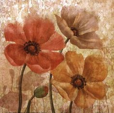 Poppy Allure I by Conrad Knutsen art print