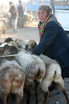 Elderly Uyghur Woman With Her Wooly Sheep Portrait Livestock Market Kashgar Xinjiang Province Far West China