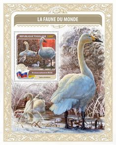 TG16418b Fauna of the World (National bird of Russia – Cygnus columbianus)