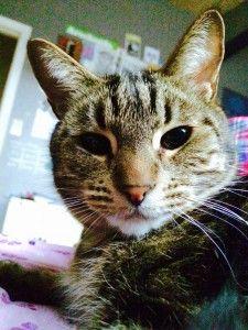 photo avec un chat trop mignon 192 sur http://ift.tt/1oohFRS