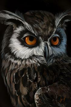 Owl Bird, Bird Art, Pet Birds, Owl Photos, Owl Pictures, Animal Sketches, Animal Drawings, Owl Wallpaper Iphone, Owl Artwork