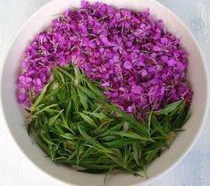IVAN-TEA 🍃🌺🌿🌸 How it becomes clear from our .- IVAN-TEA 🍃🌺🌿🌸 As the name implies, this herb comes from Russia. The taste of the infusion resembles traditional black tea, but according to … Source by - Tea Design, Tea Culture, Eat Right, Herbal Tea, Herbal Medicine, Seaweed Salad, Natural Remedies, Healthy Life, Health And Wellness