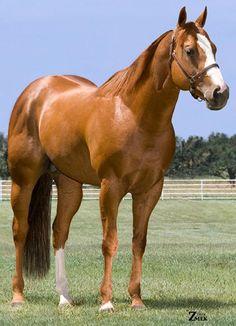 Belíssimo cavalo...