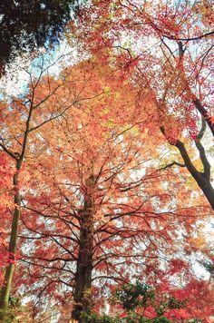 Maple leaves, using Pretty Presets for Lightroom 5. Catholic Tajimi Church Shingen Monastery