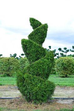 Formschnitt kegel buchsbaum gartengestaltung for Pflanzengestaltung garten