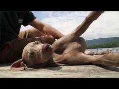 William Wegman's Wilderness: An Artist and His Dogs at Home | The New York Times - YouTube